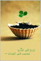 الصورة الرمزية قلب معلق بالمساجد